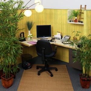 feng shui plante